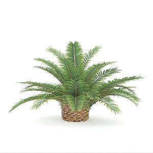 3D queen sago plant model