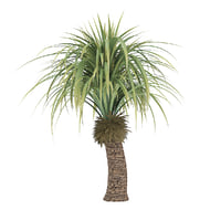 small palm tree 3D