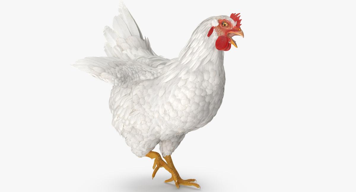 3D white chicken rigged