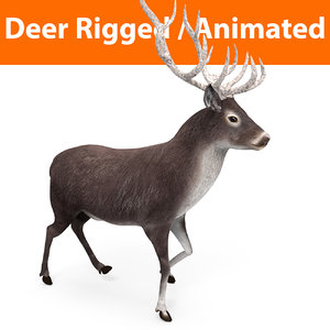 3D deer rigged animation