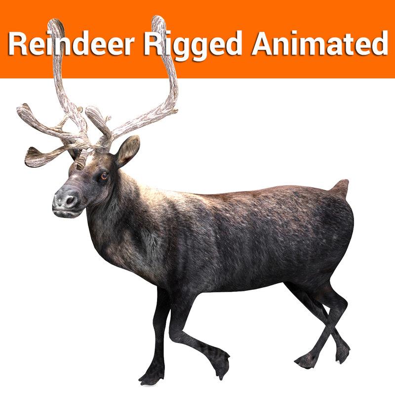 reindeer rigged deer animation 3D