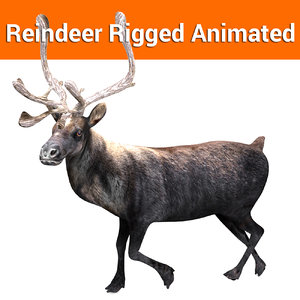 reindeer rigged deer animation 3D
