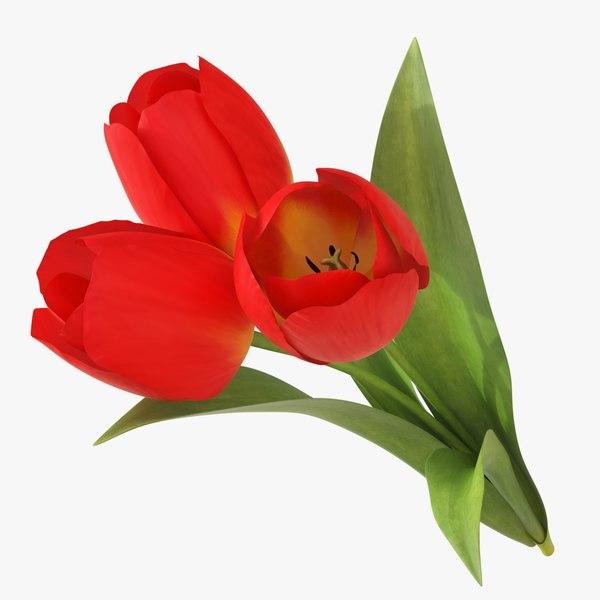 tulip 3 flower model