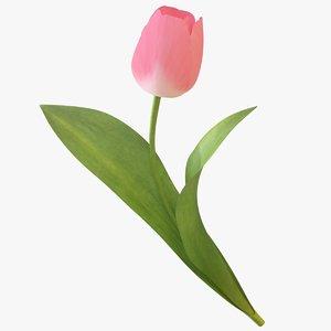 tulip flower 3D