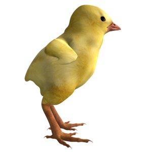 3D chicken chick