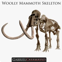 3D complete mammoth skeleton skull