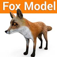 3D fox ready model