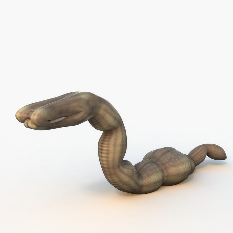 rigged worm 3D model