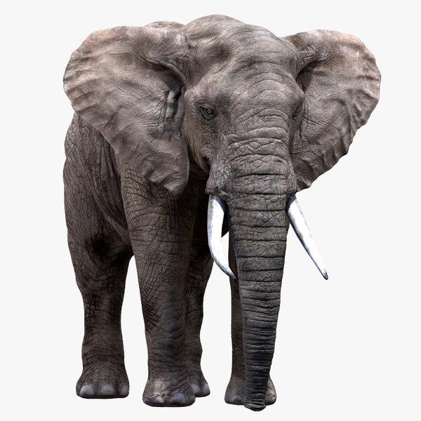 elephant nose 3D model