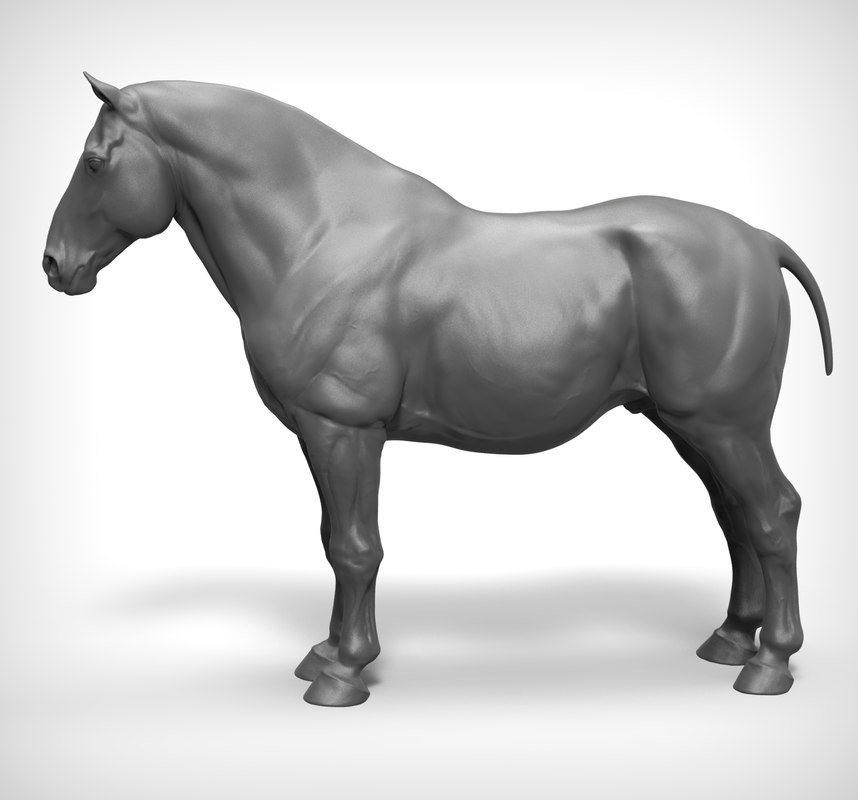 horse work ztl 3D model