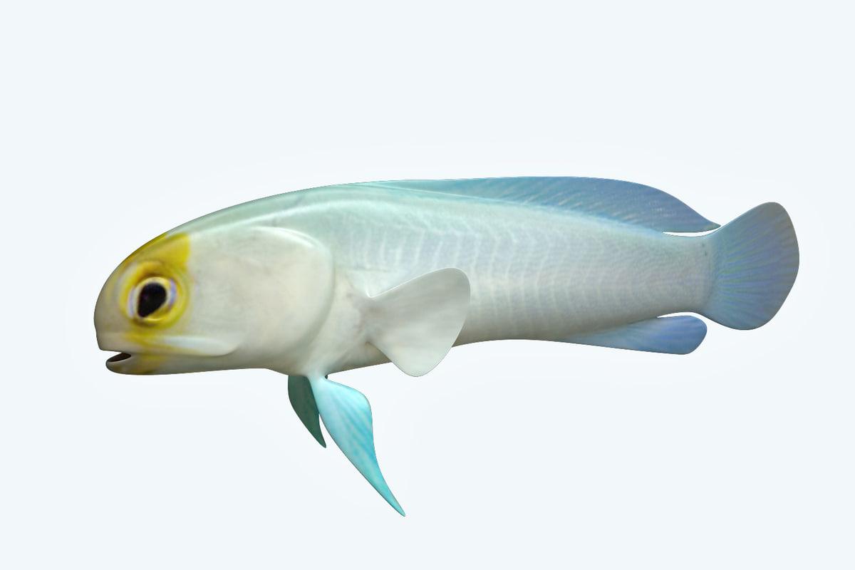 3D model yellow head fish