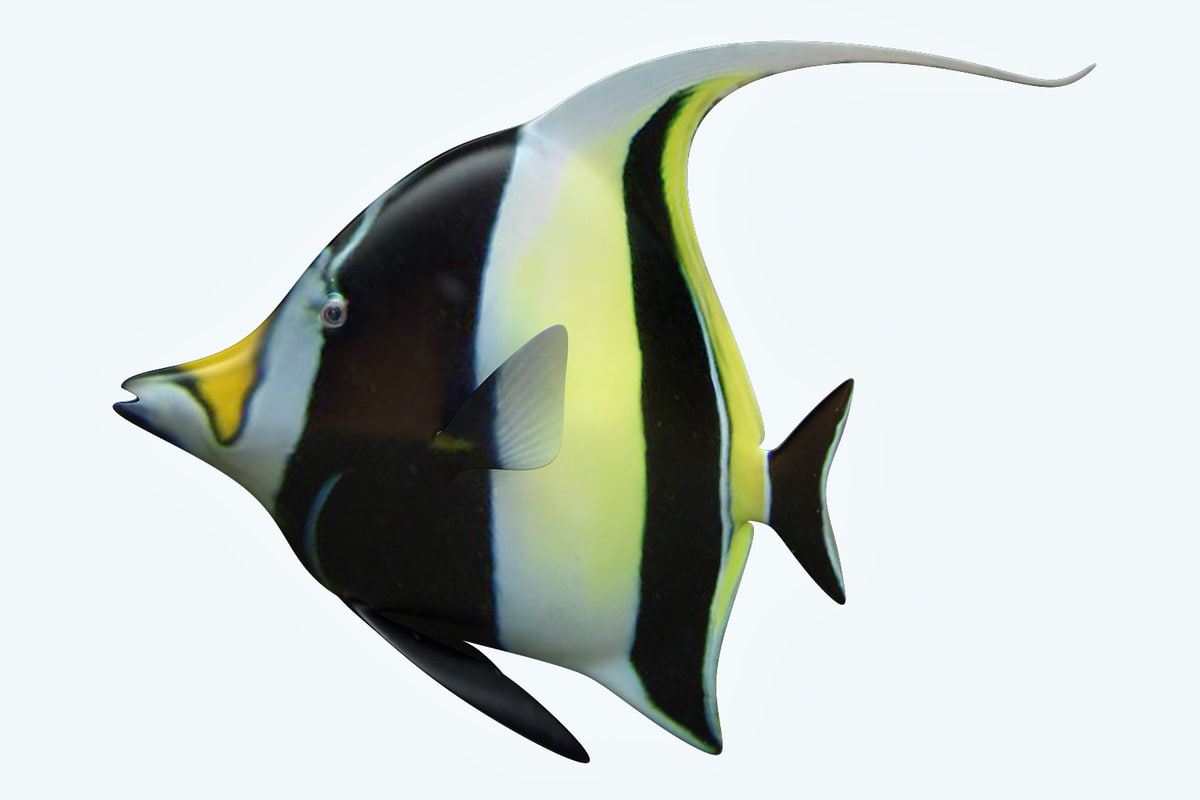 3D manfish fish
