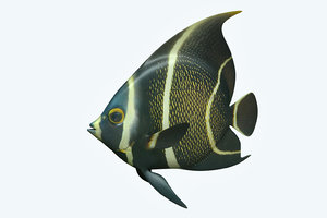 3D model anglefish 12 fish