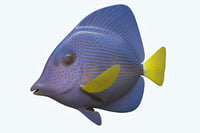 3D model zebrasoma fish