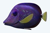 zebrasoma fish model