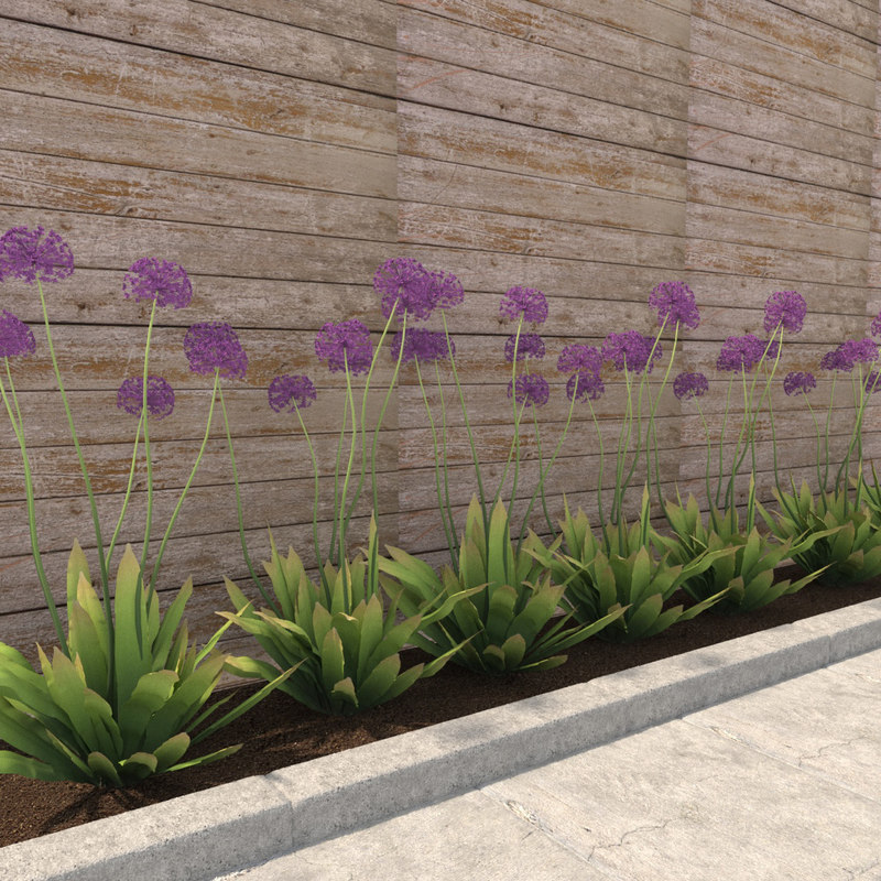 3D model decorative onions flower