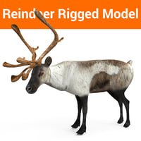 reindeer rigged deer 3D model