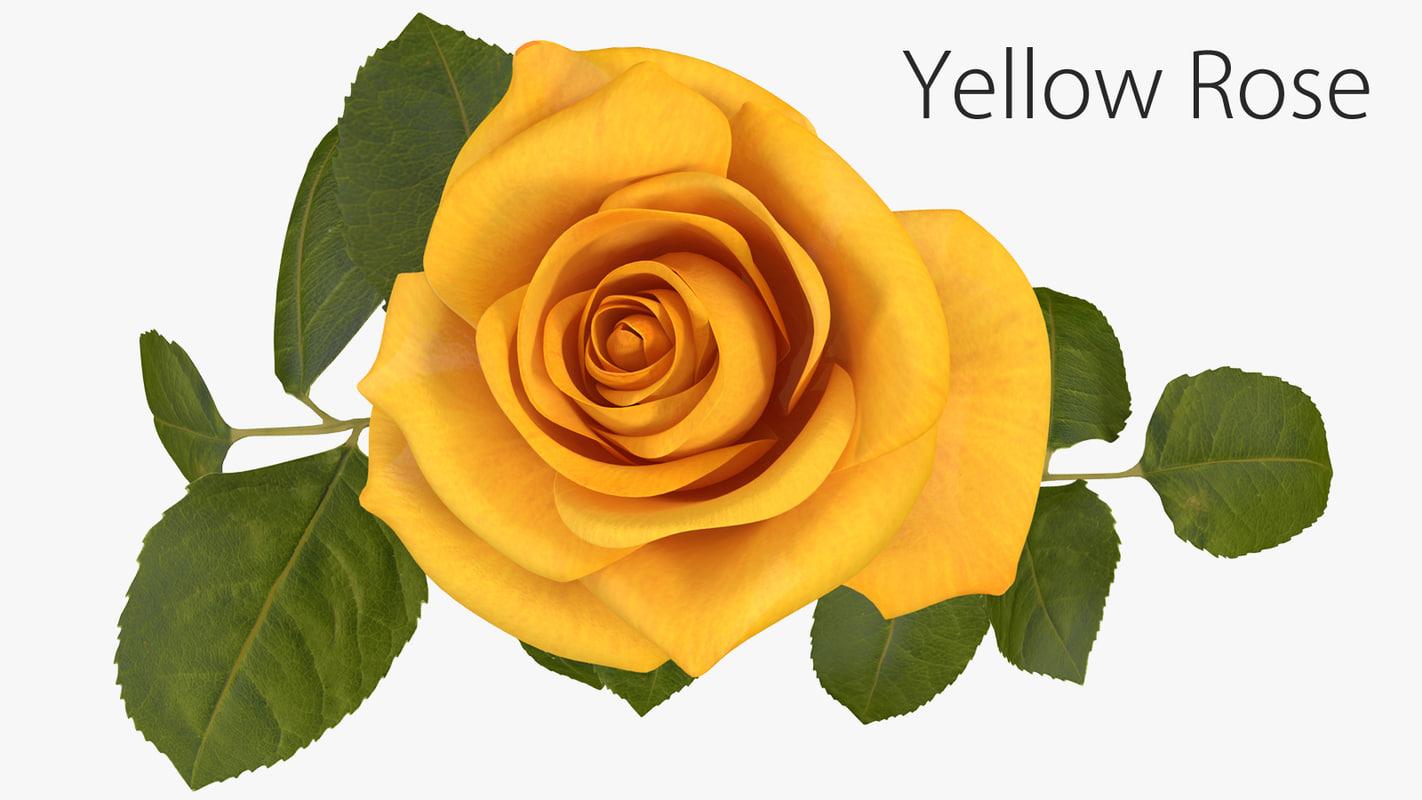 3D yellow rose model