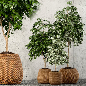3D plants 62