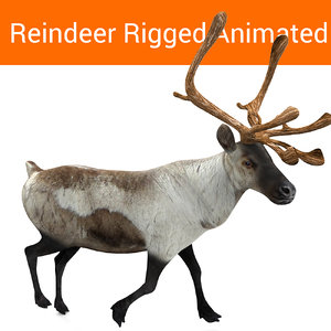 3D reindeer rigged deer animation