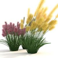 3D cortaderia flowering