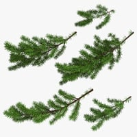 Christmas Fir Branches 03