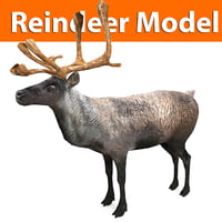 reindeer low poly model