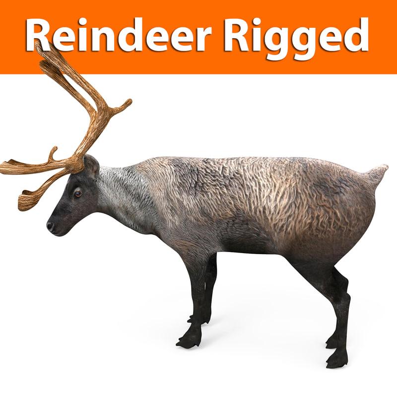 3D reindeer rigged deer