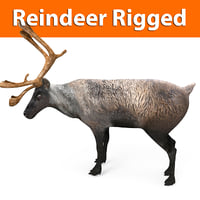 3D reindeer rigged deer