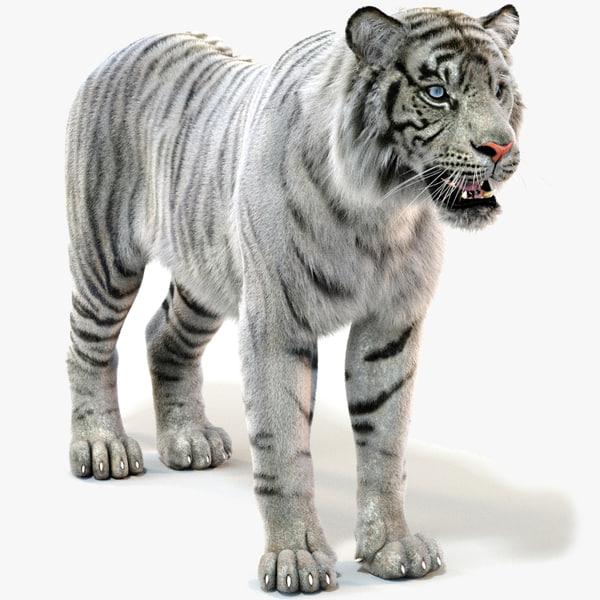 white sumatran tiger fur 3D model