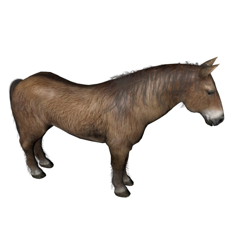 horse 3D model