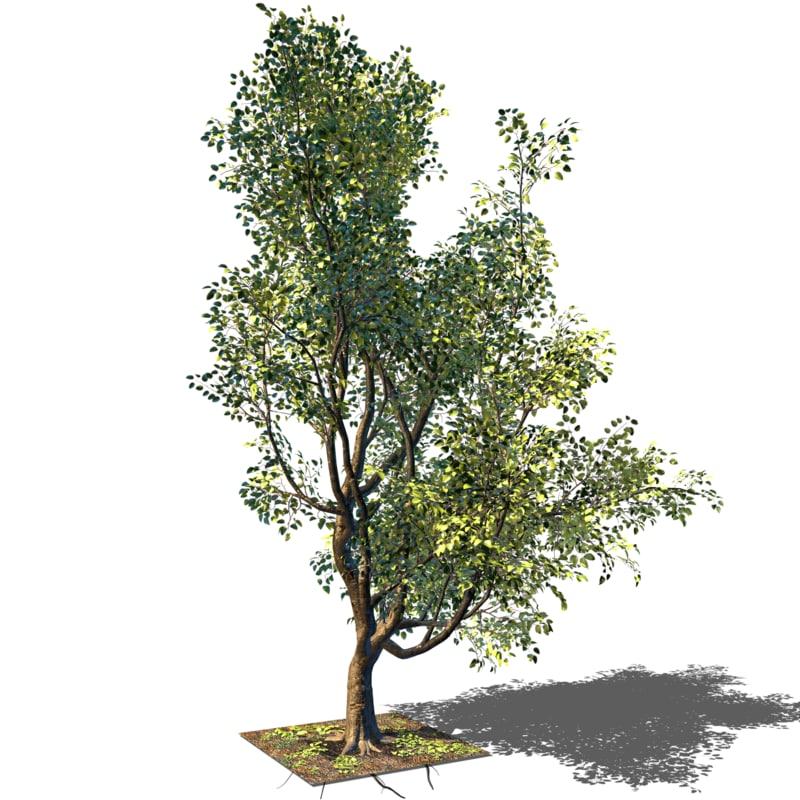 3D tree trunk model
