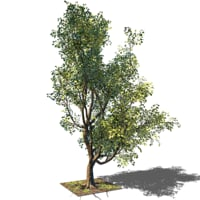 Tree 5.1