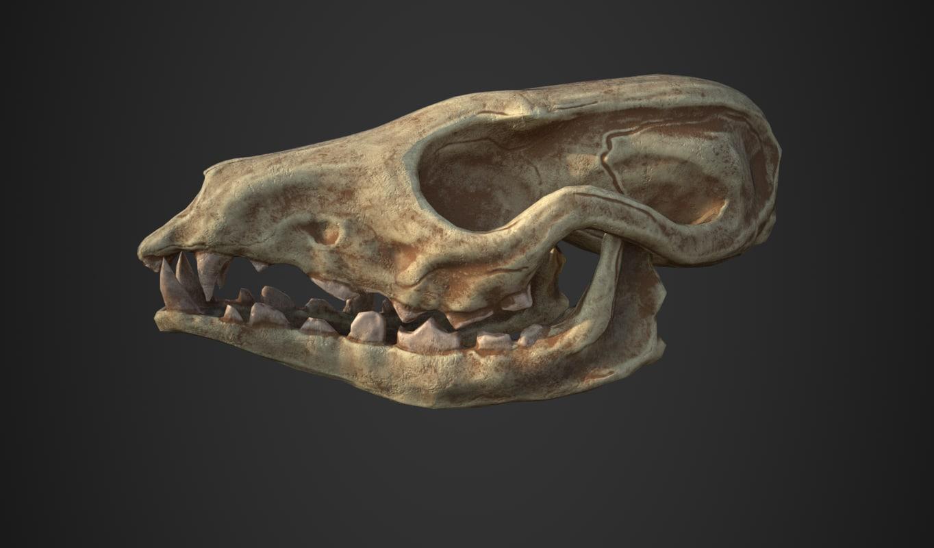 3D fox skull model