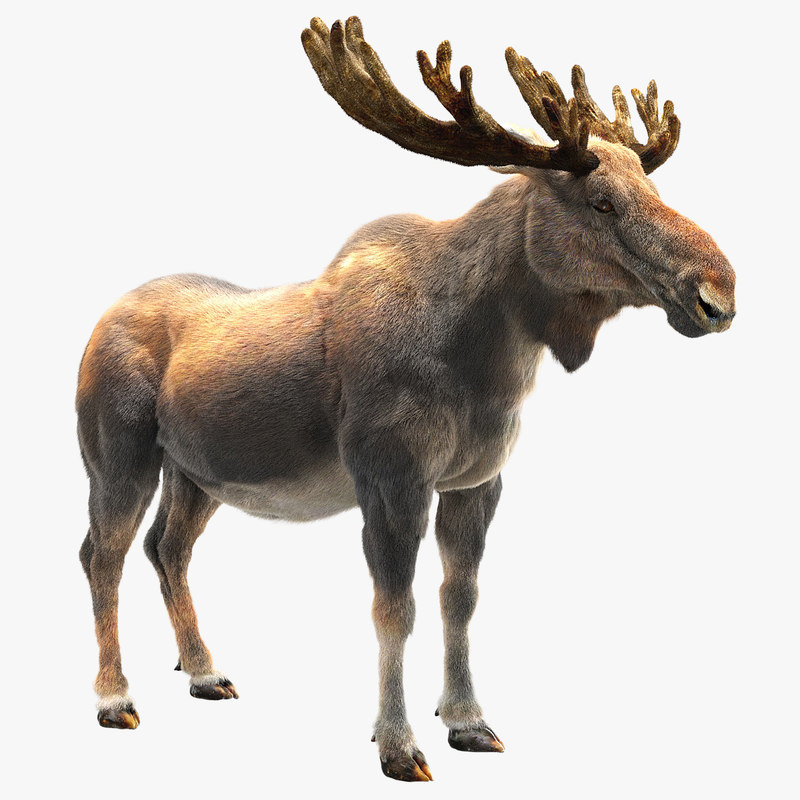 3D moose hair