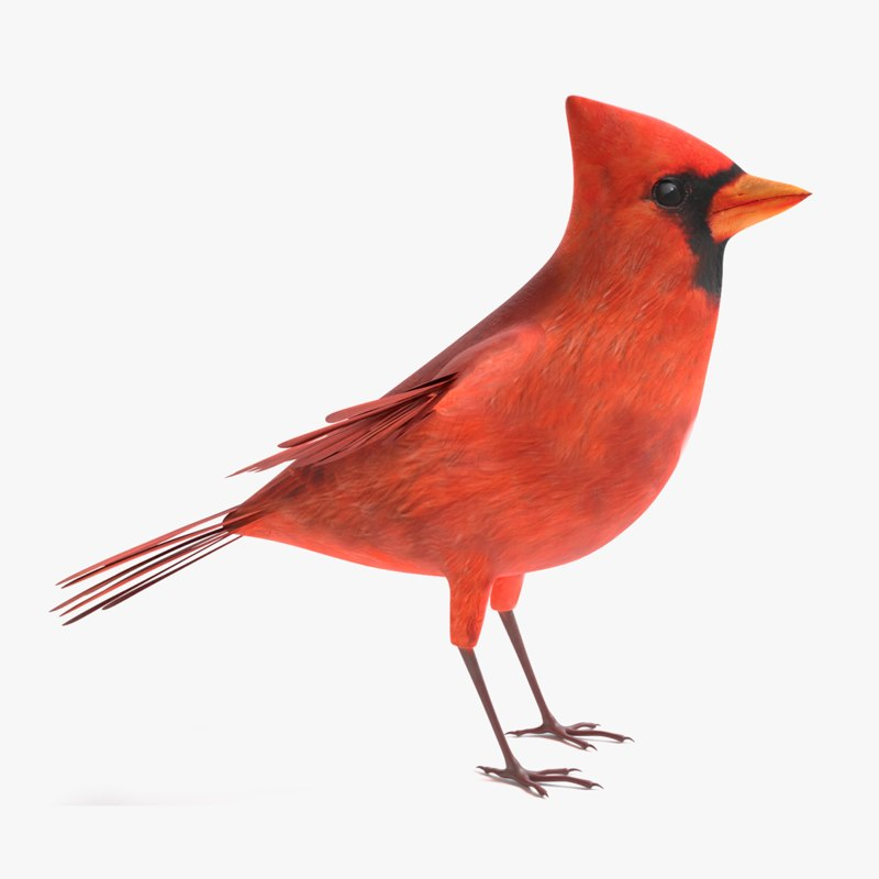 cardinal model