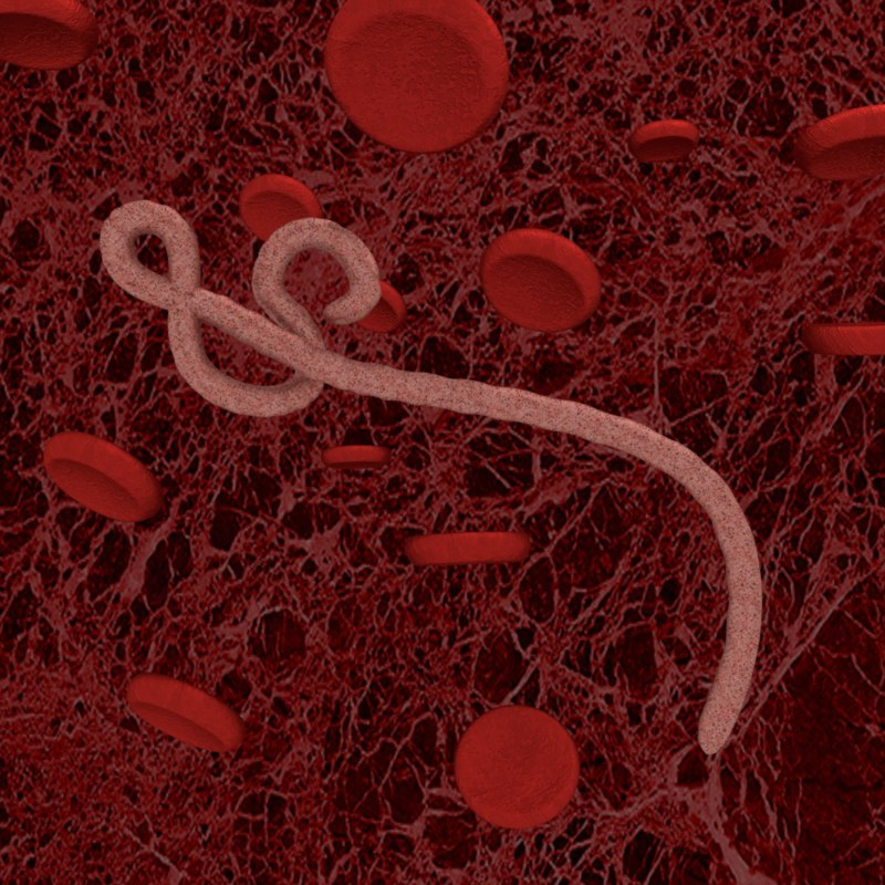 the impact of the ebola virus on A new mouse model of early ebola virus (ebov) infection has shown scientists how early responses of the immune system can affect development of ebov disease the model could help identify.