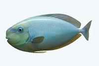 3D pale fish