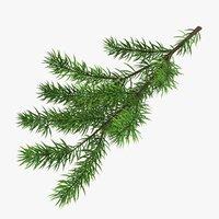 Fir Branch 08
