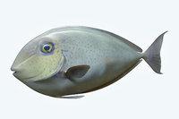 3D pale fish 2 model