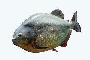 piranha 2 model