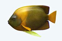 angle fish 14 3D model