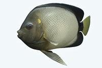 angle fish 15 3D model