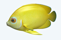 angle fish 17 3D
