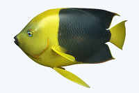 3D angle fish 18