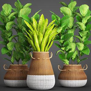 plants basket rattan 3D