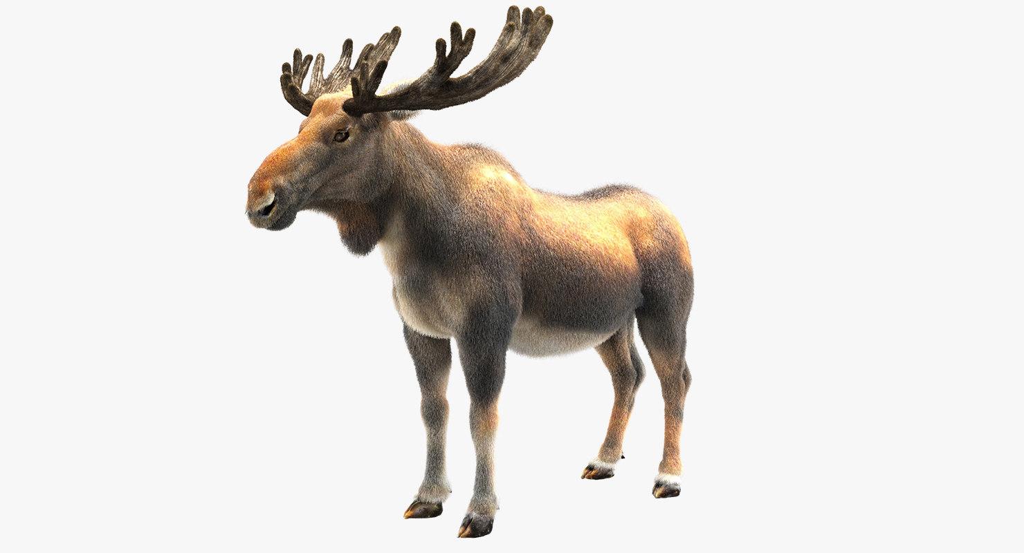 3D moose fur hair