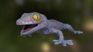 3D model gecko tokay