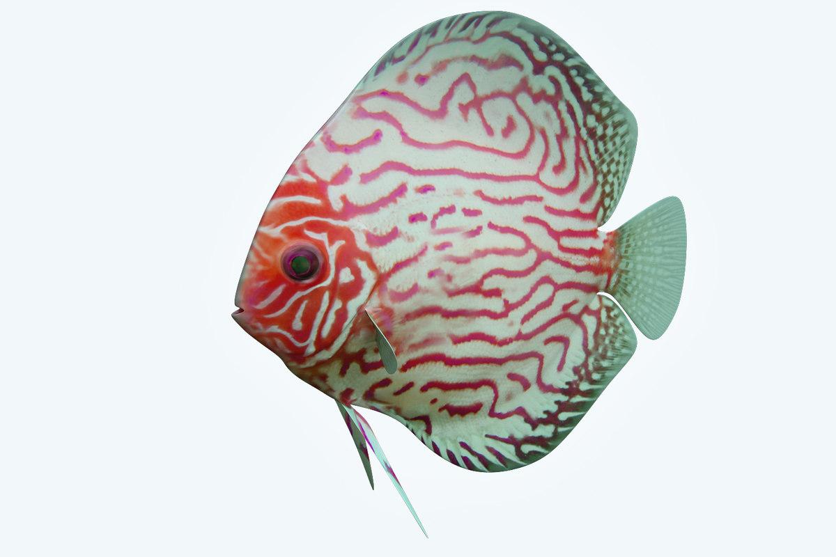 discus fish 6 model
