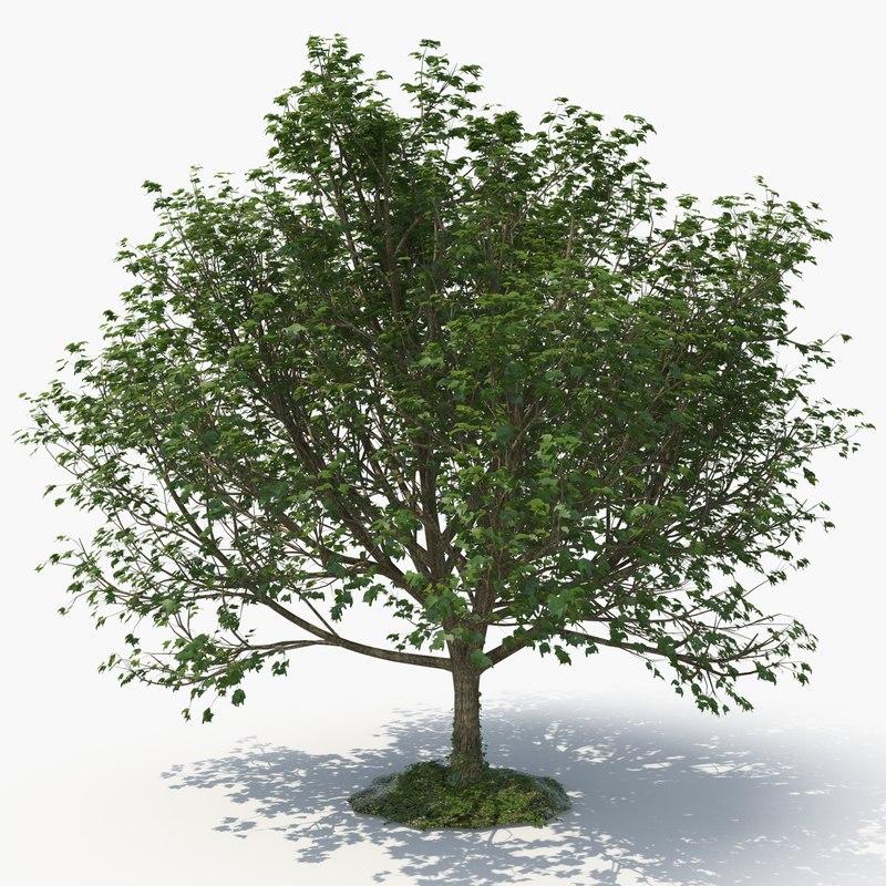 realistic tree 3D